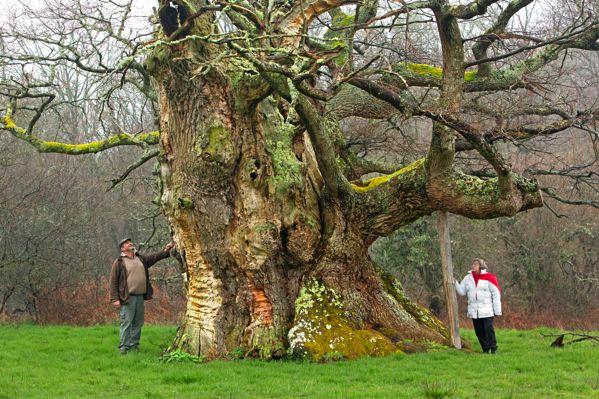 arbre de l'année