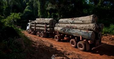 Transport du bois