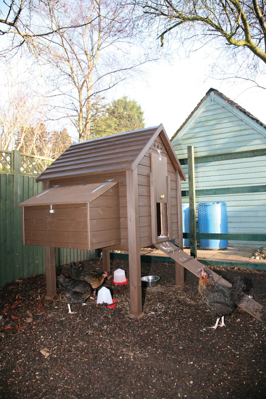 Lames De Bardage Bois Pas Cher construisez votre poulailler - l'atelier bois