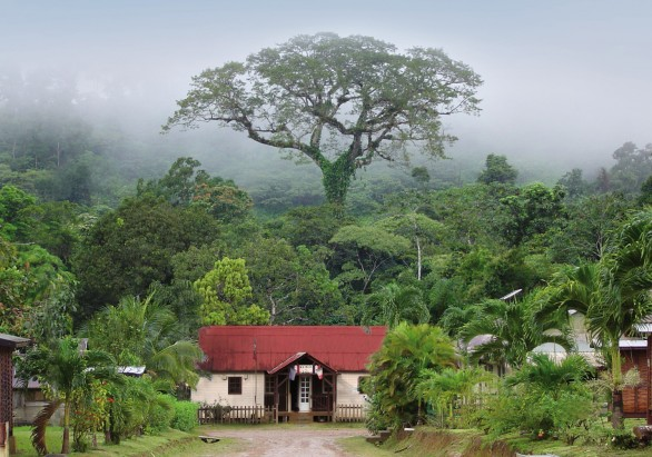 Le prix du public a été remis au président du Parc amazonien de Guyane pour le fromager de Saül © Guillaume Feuillet/Parc amazonien de Guyane)